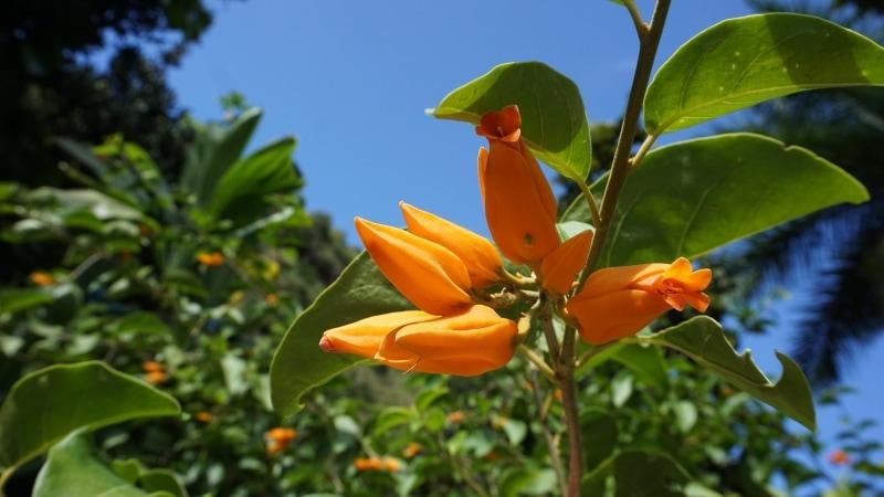 Waimea Valley Botanical Gardens beautiful flowers - Hawaiianly