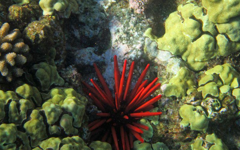 Coral Reef - Hawaiianly.com
