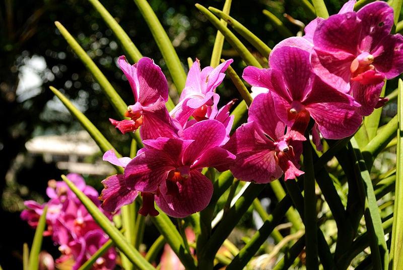 Orchids at Foster Botanical Garden Hawaii