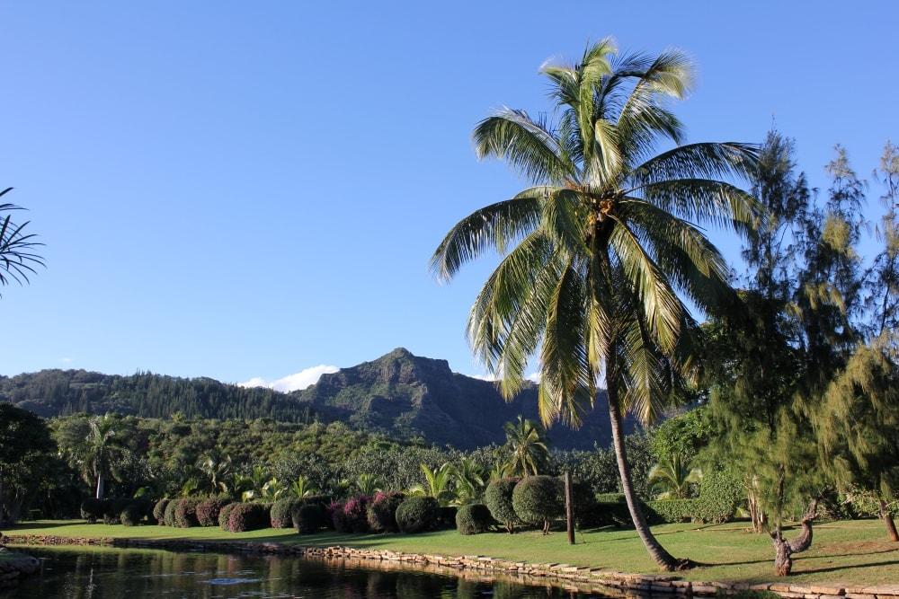 Nice Luau scenery on Kauai - Hawaiianly
