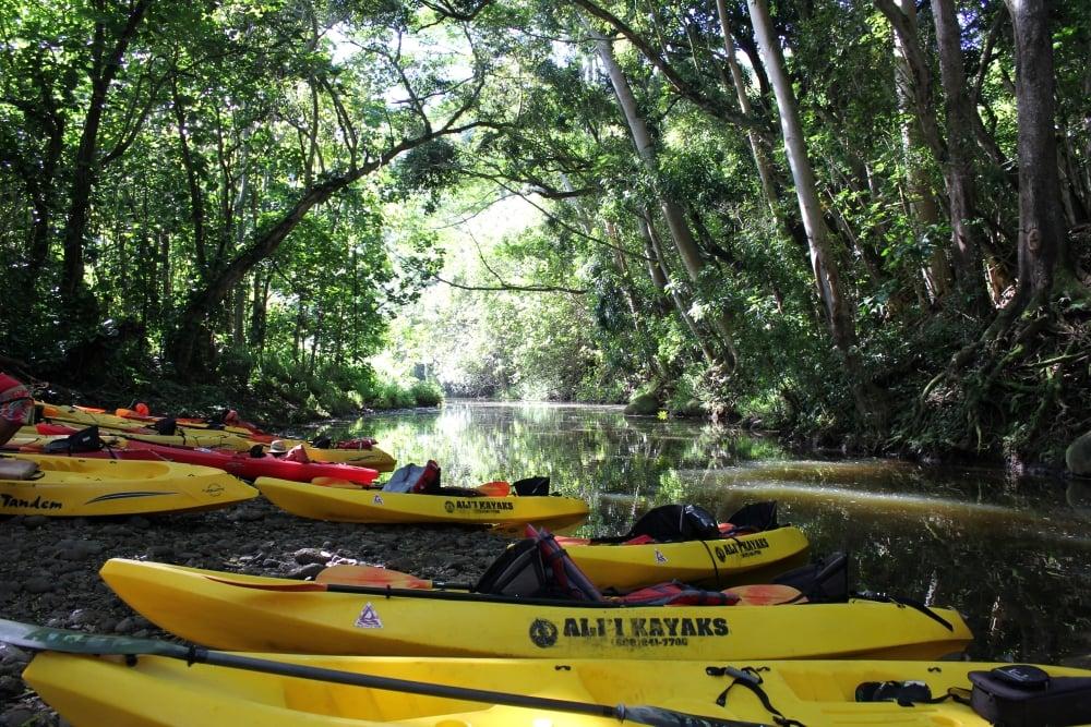 Kayaking the Wailua River on Kauai - Hawaiianly