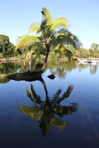 Palm tree reflection at Smith's Tropical Paradise Garden Kauai - Hawaiianly