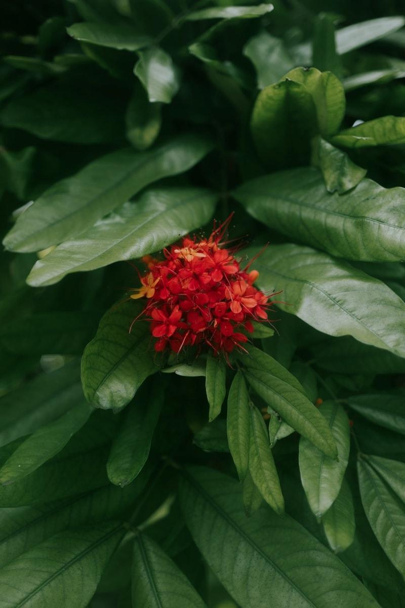 Red flower in Ho'omaluhia Botanical Garden Hawaii