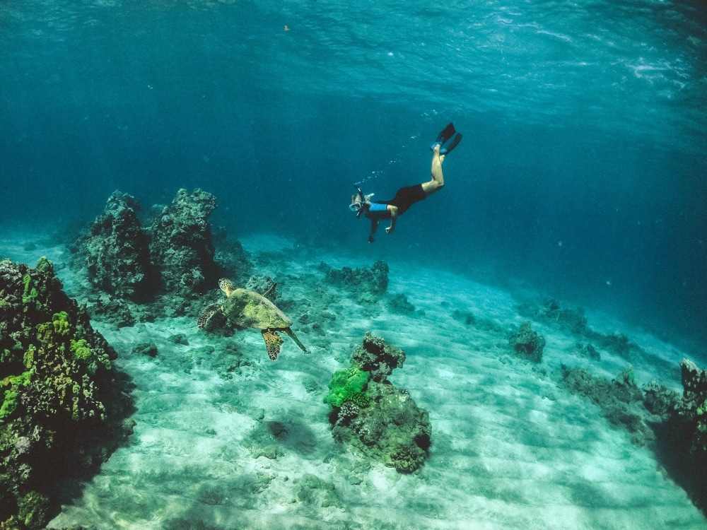 Snorkeling with sea turtles in Maui - Hawaiianly