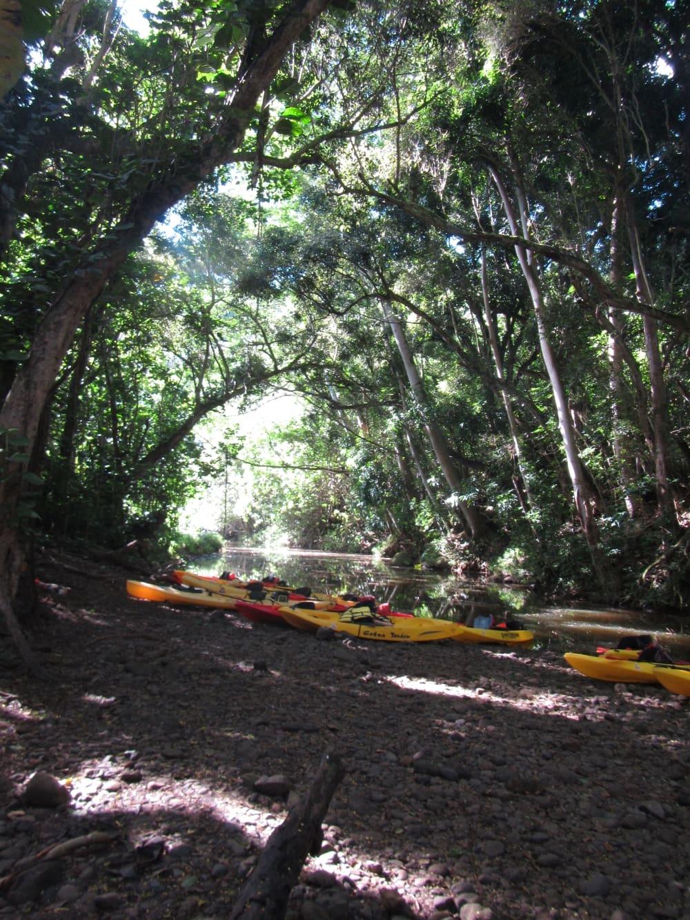 Kayak the Wailua River then Hike to Secret Falls on Kauai - Hawaiianly