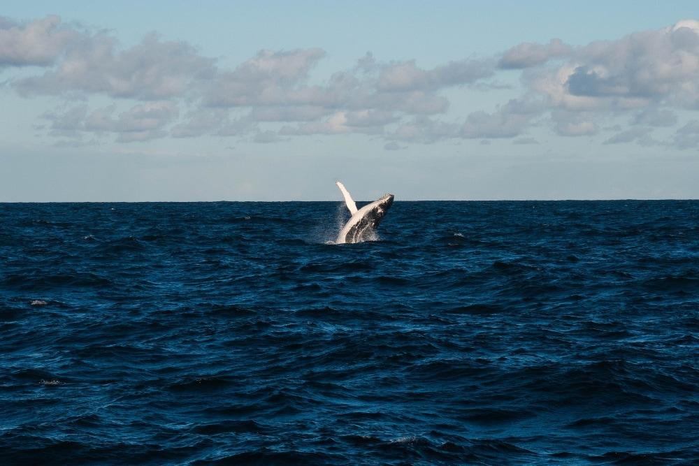 See whales on Kauai - Hawaiianly