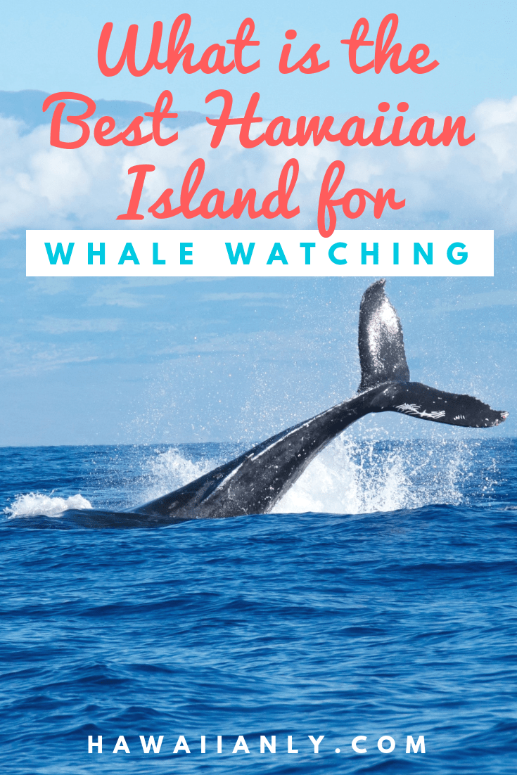 Best Hawaii Island for Whale Watching - Hawaiianly.com